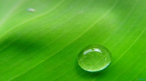 water_drop_in_the_leaf-1920x1080