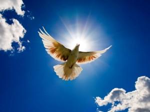 flying-dove-bird-wallpaper