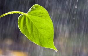 rain-yafi1