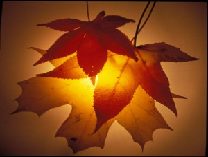 autumn-blessings-design-shaded-2