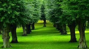 beautiful-trees-row